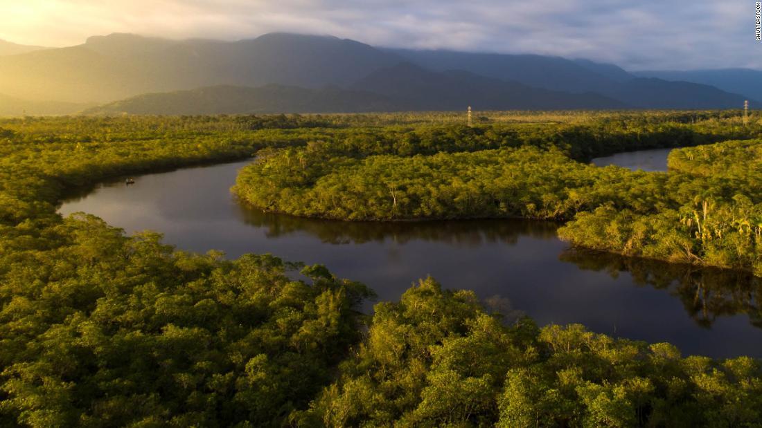 Oamenii din pădure Amazon ar putea dispărea în mai puțin de 50 de ani după ce a ajuns punctul de vârf, avertizează oamenii de știință