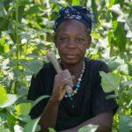 Babban Gona ajută fermierii nigerieni să își dezvolte afacerile