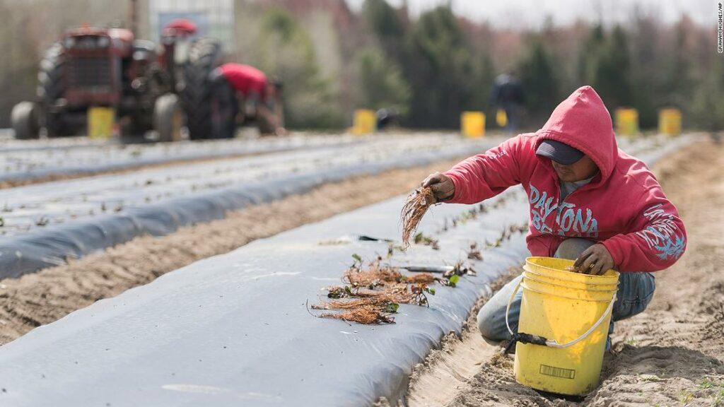 Mexic Interzice temporar lucrătorii din Canada datorită coronavirusului