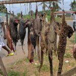 În Africa, fauna sălbatică crește riscul de boli fatale. El nu trebuie